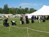 show-ring